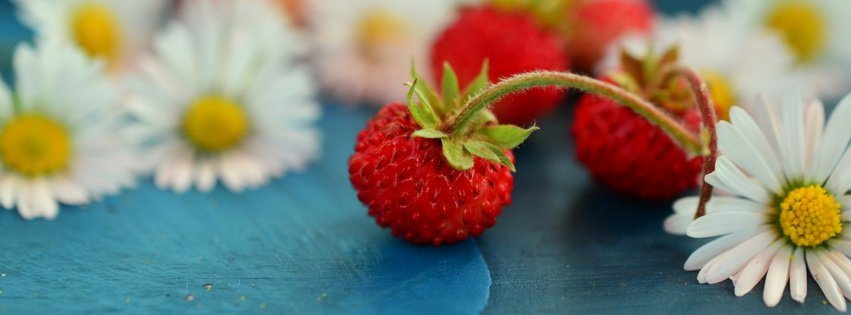Wild Strawberry and Chamomile Facebook cover photo