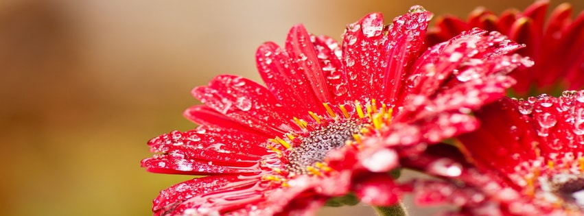 Windows 8 Flower Facebook cover photo