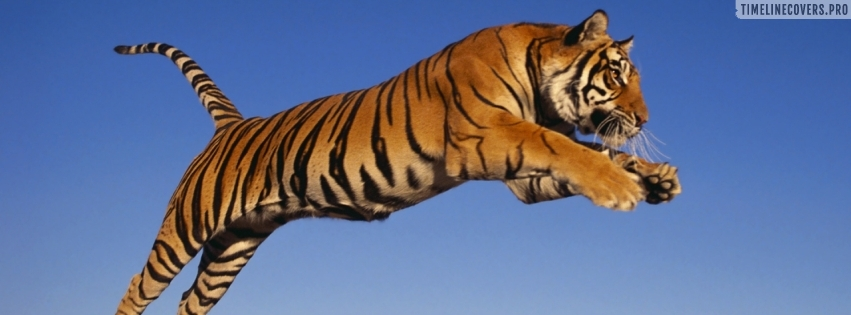 Bengal Tiger Jumping Facebook cover photo