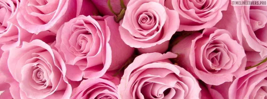 Bright Pink Roses Facebook cover photo