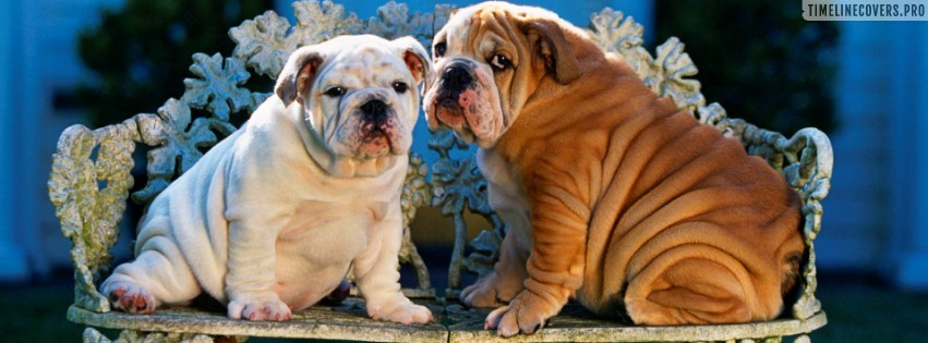 Bulldog Puppy Dogs Facebook cover photo