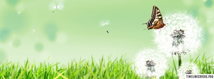 Butterfly and Dandelions Facebook cover photo