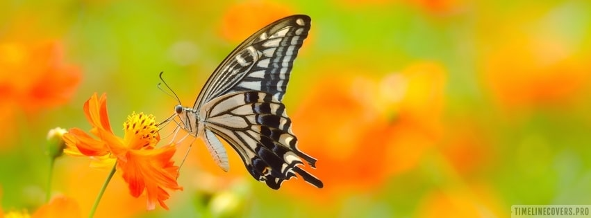 Butterfly on Orange Flower Facebook cover photo
