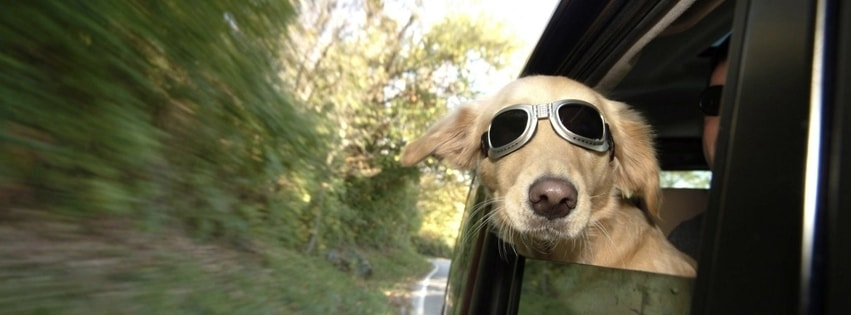 Cool Dog Facebook cover photo