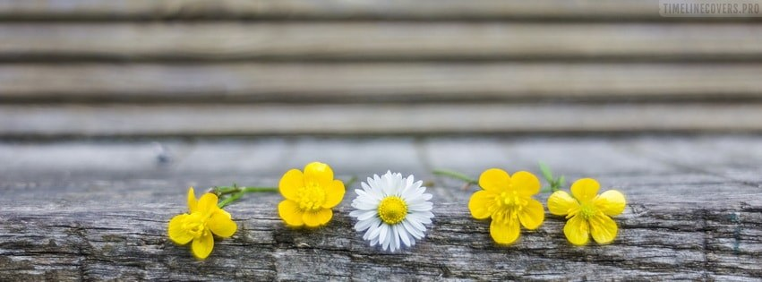 Cute Flowers Facebook cover photo