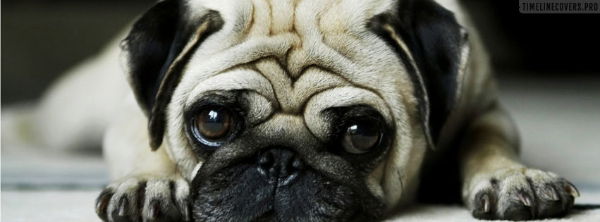 Cute Puppy Dog Waiting for You to Arrive Facebook cover photo