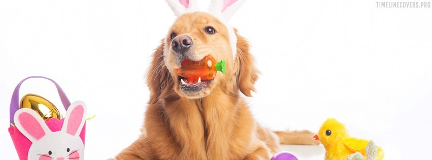 Easter Dog Rabbit Facebook cover photo