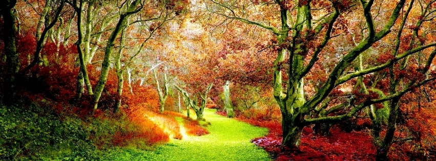 Fall in a Green Forest Facebook cover photo