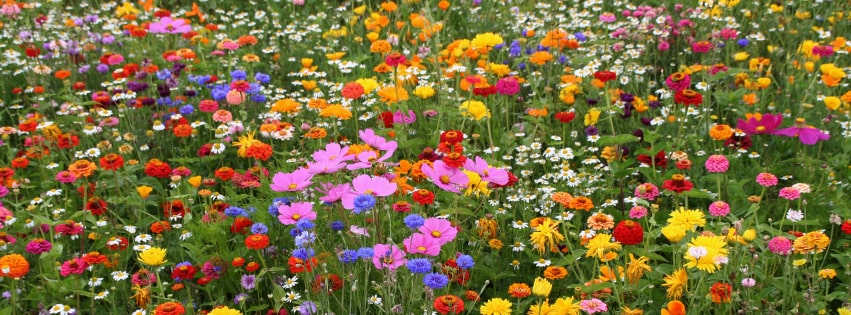 Field of Spring Flowers Facebook cover photo