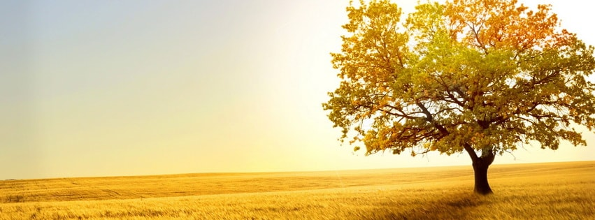 Fields Grass Trees Autumn Facebook cover photo