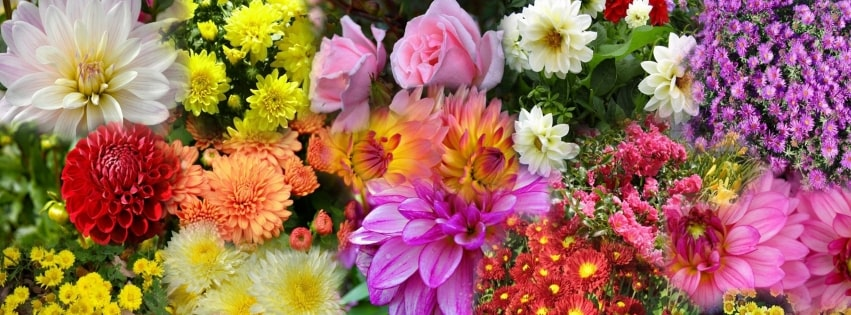 Flowers Montage Background Dahlia Daisy Facebook cover photo
