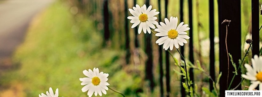 Flowers Chamomile Fence Facebook cover photo