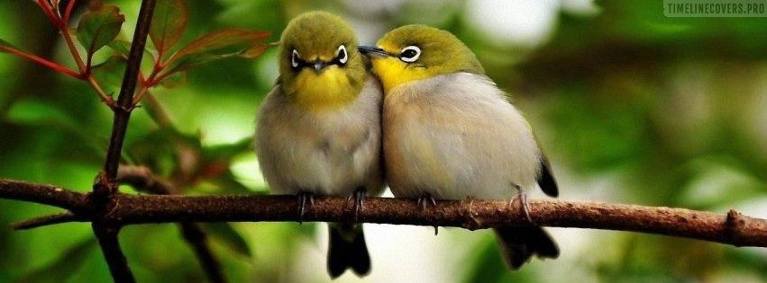 Forest Birds in Love Facebook cover photo