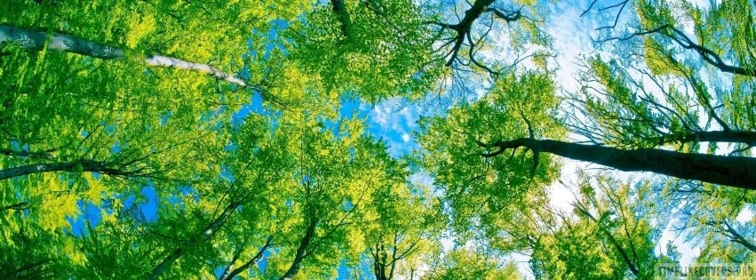 Forest Foliage on a Sunny Day Facebook cover photo