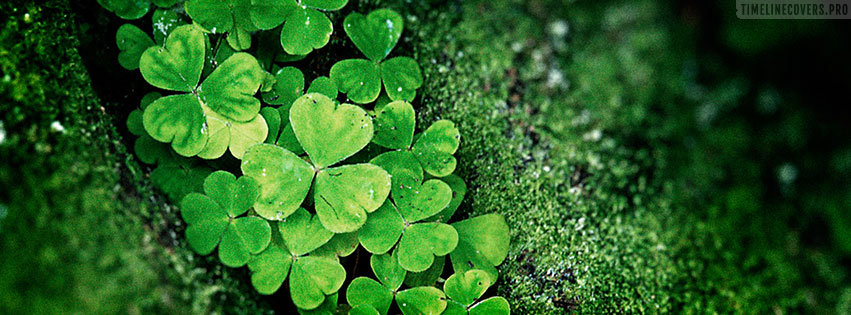 Forest St Patricks Day Facebook cover photo