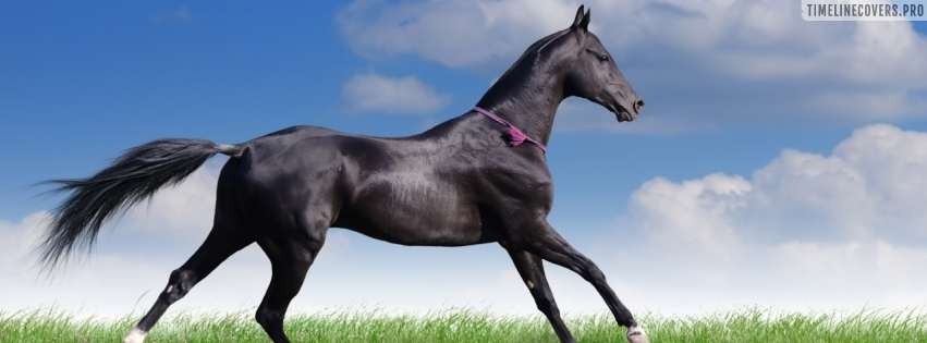 Graceful Horse Facebook cover photo