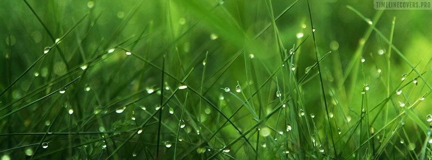 Green Grass After Rain Facebook cover photo