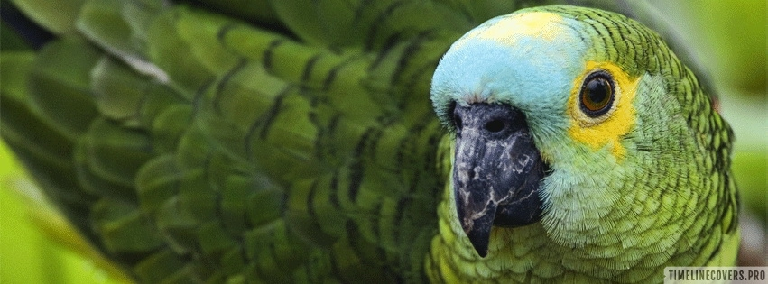 Green Parrot Close Up Facebook cover photo