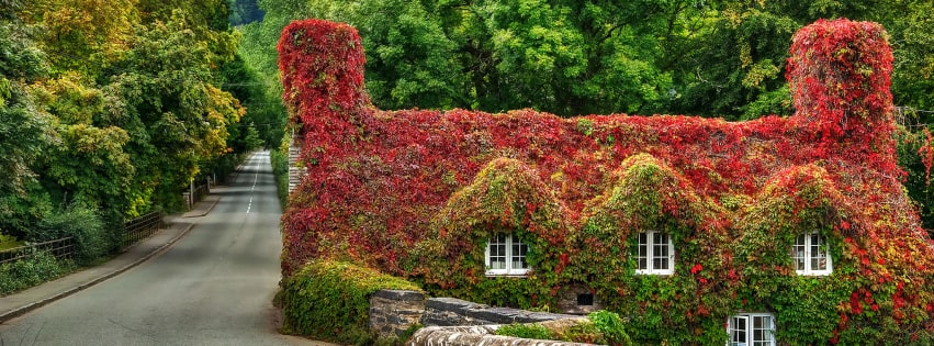 House in Wales Covered by Ivy Facebook cover photo