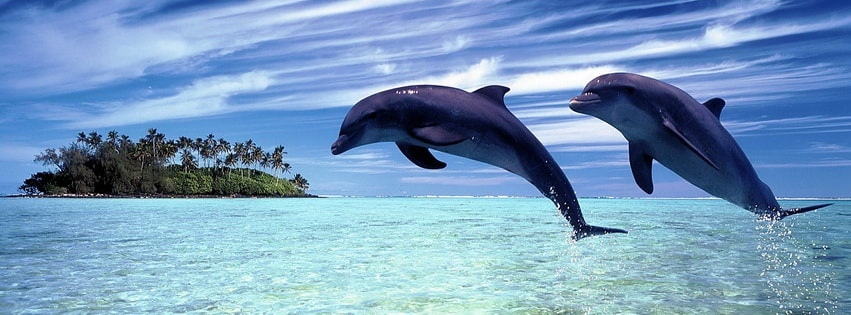 Jumping Dolphins Facebook cover photo
