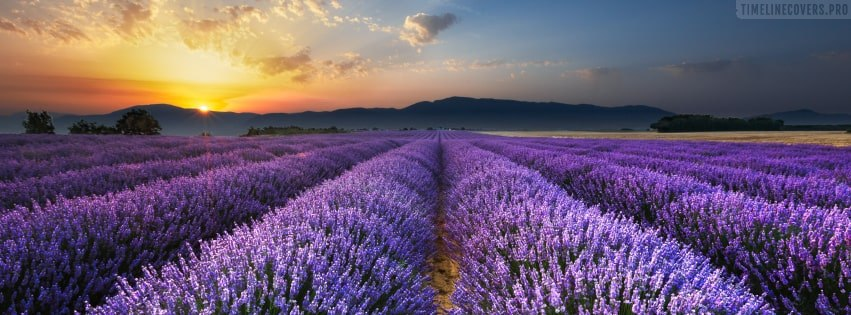 Lavender Field at Sunrise Facebook cover photo