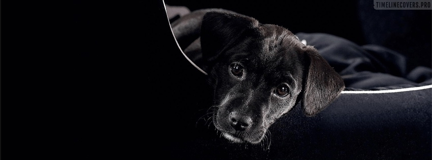 Lovely Black Doggy Facebook cover photo