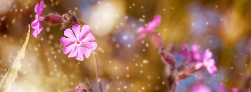 Lovely Pink Blossom Facebook cover photo