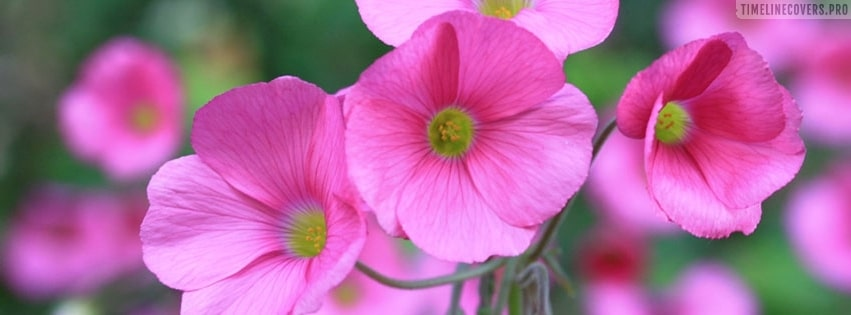 Lovely Pink Flowers Facebook cover photo
