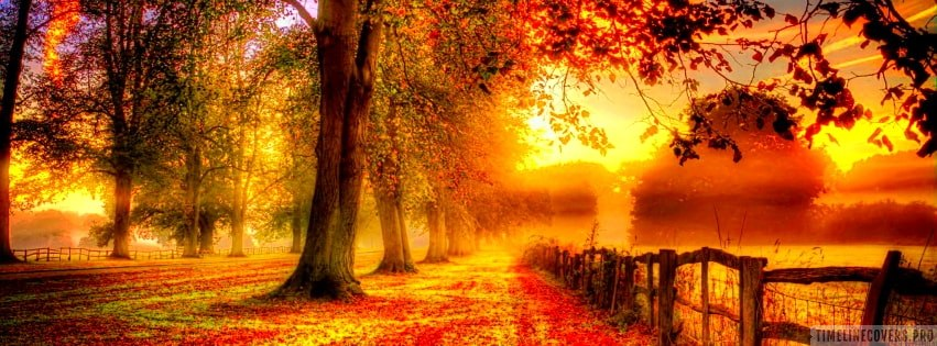 Misty Autumn Park HDR Facebook cover photo