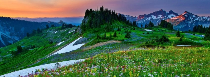 Mountain Wildflowers in Spring Facebook cover photo