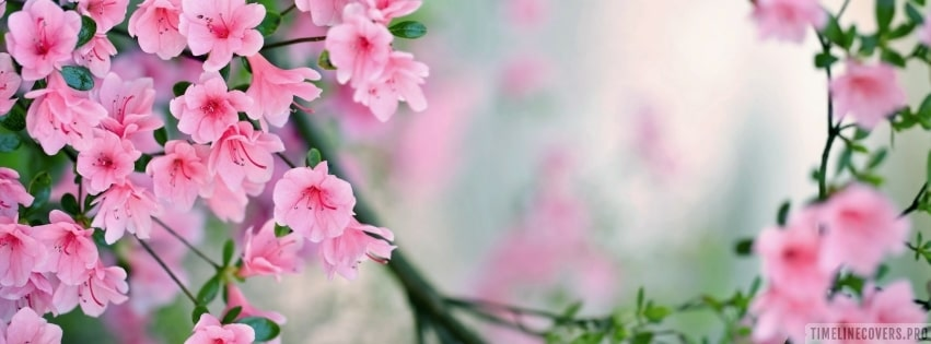 Pink Blossoms Flowers Facebook cover photo