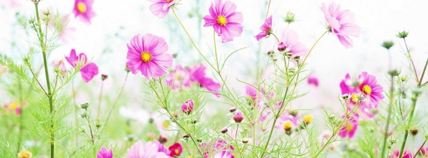 Pink Field Flowers Facebook cover photo