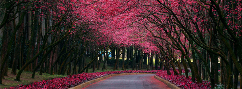 Pink Passage Facebook cover photo