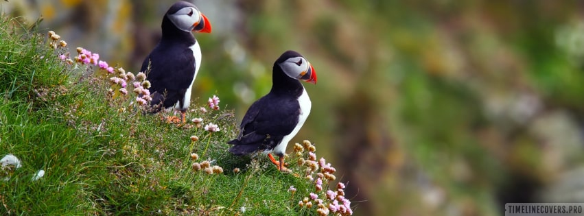 Puffin Facebook cover photo