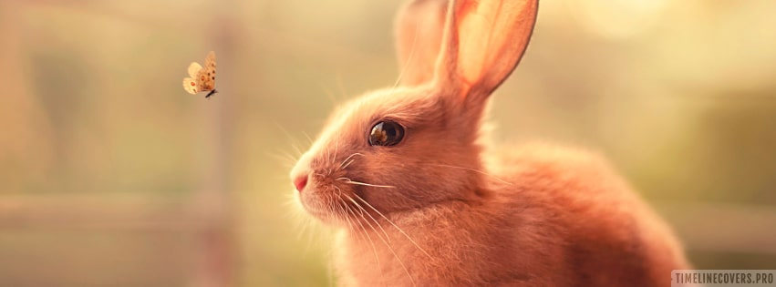 Rabbit with a Small Butterfly Facebook cover photo