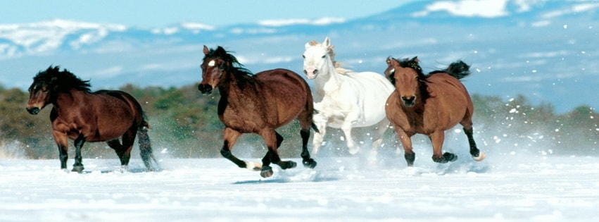 Horses running in snow Facebook cover photo
