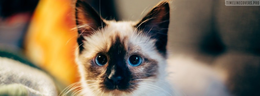 Small Kitty with Blue Eyes Facebook cover photo
