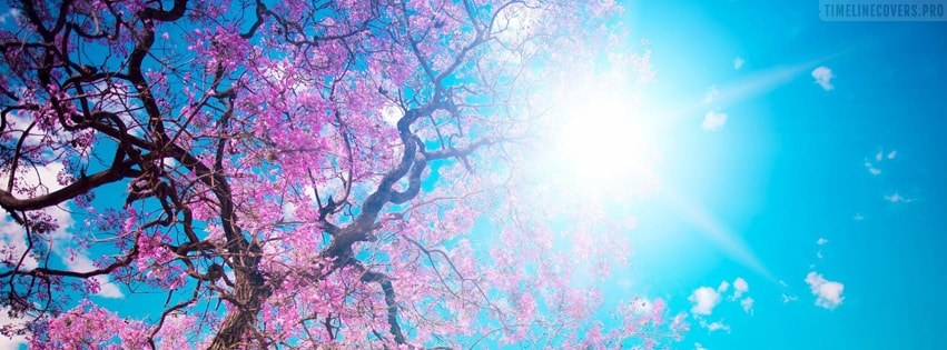 Spring Blossoms Facebook cover photo