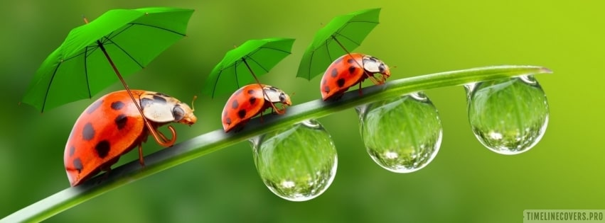 St Patricks Day Ladybugs with Green Umbrellas Facebook cover photo