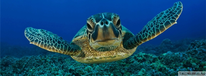 Turtle in The Ocean Facebook cover photo