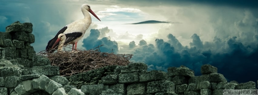 White Storks in a Nest Facebook cover photo