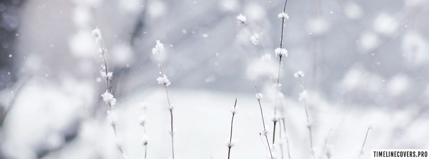 Winter Weed Facebook cover photo
