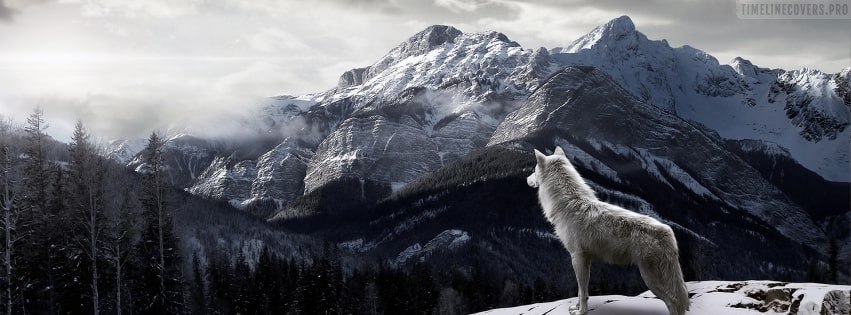Wolf Admiring The Landscape Facebook cover photo