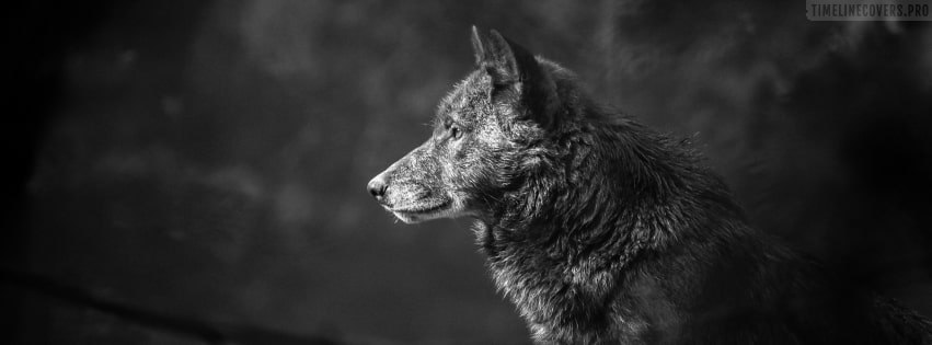 Wolf Muzzle Facebook cover photo