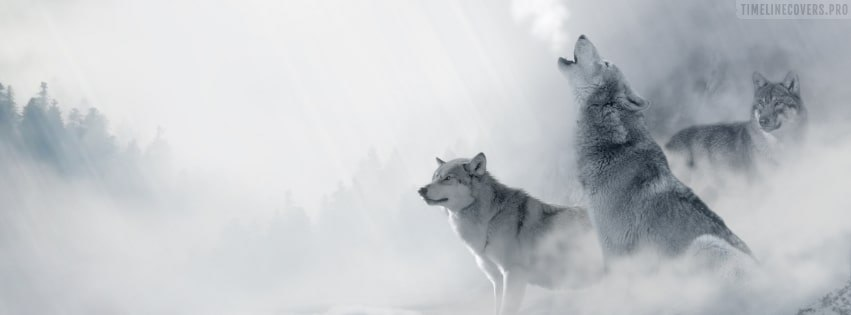 Wolfs Howling Facebook cover photo