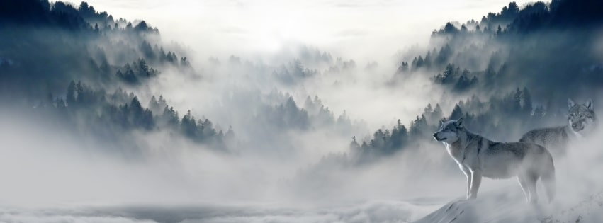 Wolves High Above The Mist of The Clouds in a Spiritual World Facebook cover photo