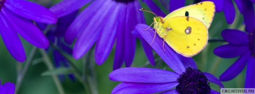 Yellow Butterfly on Purple Flower Facebook cover photo