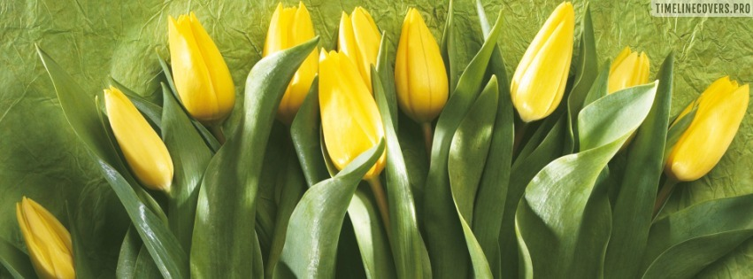 Yellow Tulips Facebook cover photo