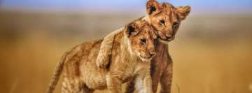 2 Lion Babies Facebook Cover-ups