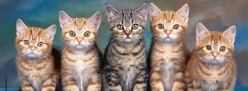 5 Cute Kittens Facebook Background
